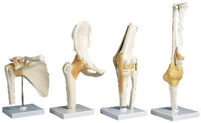 Elbow Joint Functional Model