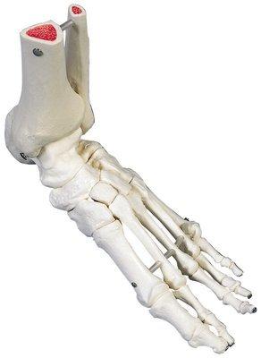 Flexible Foot Skeleton