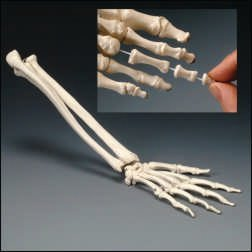 Flexible Hand Skeleton